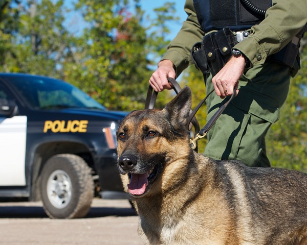 Use of Police Dogs at Traffic Stops